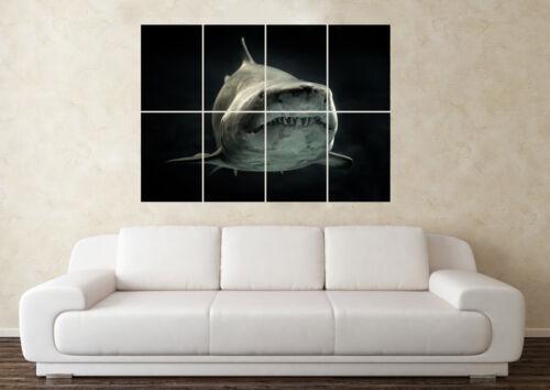 Large Great White Shark Predator Sea Teeth Jaws Wall Poster Art Picture Print