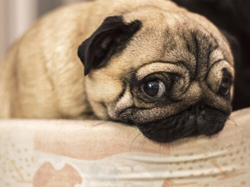 Cleaning Pet Urine From Carpet Tile And Wood Floors - How to clean dog urine from tile floors