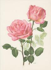 ROSE 'GRACE DE MONACO' Rose offset-LITOGRAFICO 1965 Anne Marie TRECHSLIN Roses