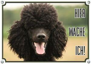 Panneau d'avertissement en métal - Poodle - Bouclier de chien Stable 1.5mm Thick Dur Ha