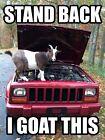 Goat  refrigerator magnet 2 1/2x 3 1/2
