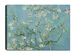 Van Gogh Mandorlo Quadro Stampa su Tela Canvas Quadri Moderni XXL Arte Casa