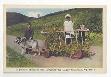 Canada Gaspe Children Dog Hay Cart Habitant P. Q. Vtg HV Henderson Postcard