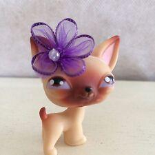 Littlest Pet Shop Chihuahua #1 Tan Brown Purple Eyes Puppy Dog USA seller 9 pics