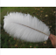100pcs-Natural-white-Ostrich-feather-6-8in-15-20cm-Diy-carnival-costume-headress miniature 2