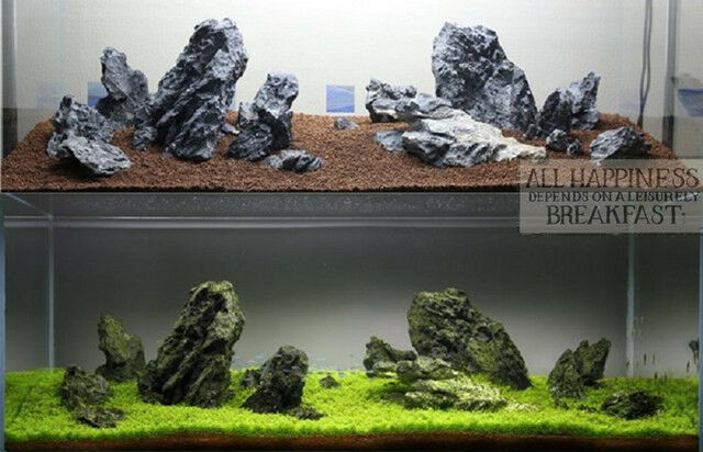 Buy Aquascaping Ada Seiryu Stone Rock Aquarium Tropical ...