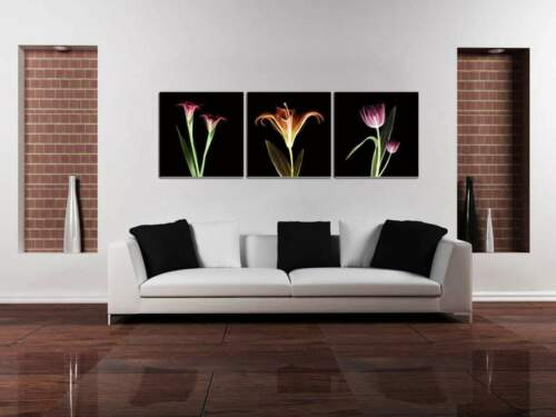 Chic Home Decor Tropical 3 Piece Wrapped Canvas Giclee Print X-Ray Wall Art