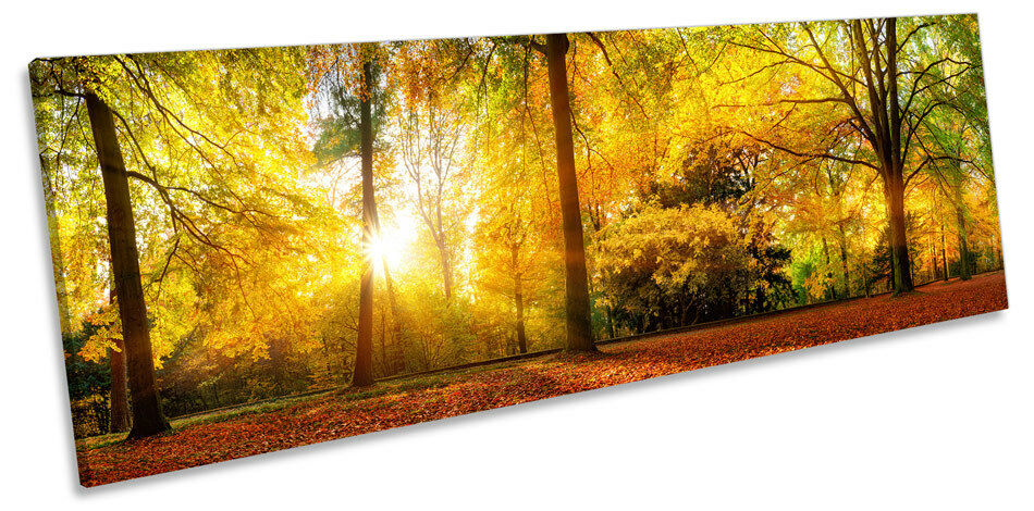 Gelb Sunset Forest Woods Picture PANORAMA CANVAS WALL ART Print