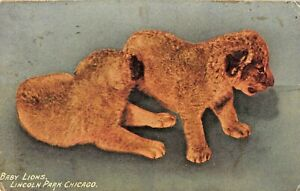 CHICAGO-ILLINOIS-LINCOLN-PARK-BABY-LIONS-1913-PSMK-POSTCARD
