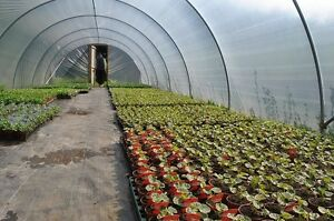 BRAND-NEW-14FT-X-84FT-POLYTUNNEL-KIT-HEAVY-DUTY-PROFESSIONAL-GREENHOUSE-WD