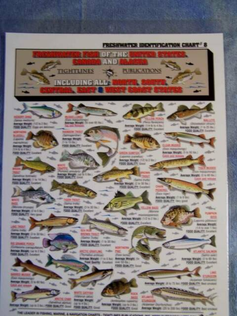 Freshwater Fish Identification Id Chart Line Lines Publications 8