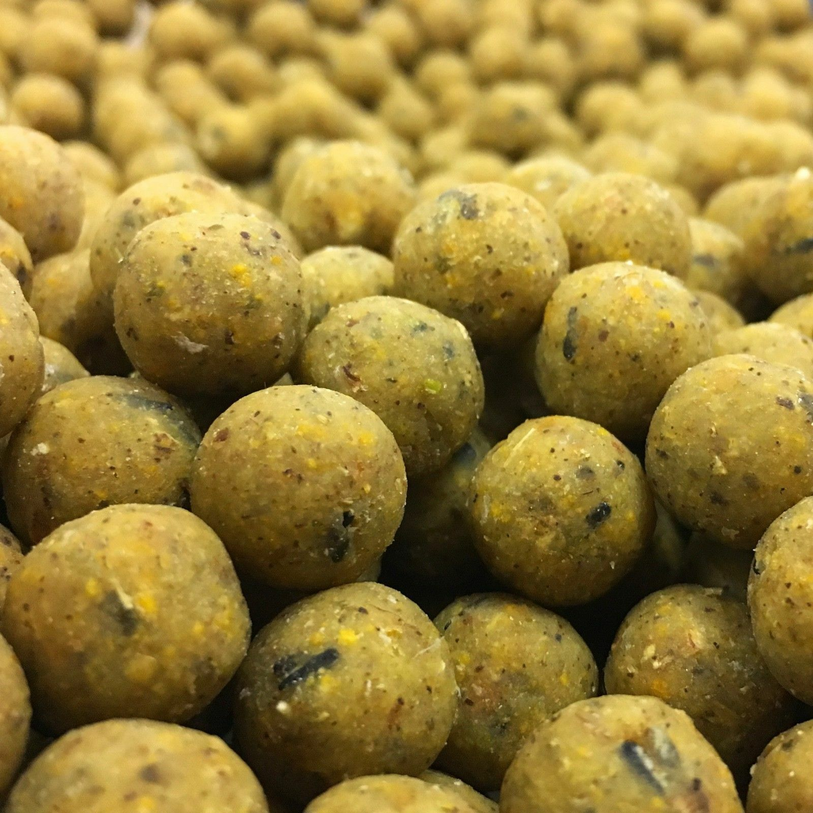 15MM TIGERNUT FISHING BOILIES  BAIT 10KG FREEPOST