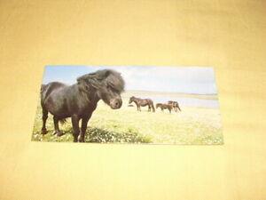 Nestle-MERVEILLES-DU-MONDE-Carte-N-181-034-Le-poney-shetland-034