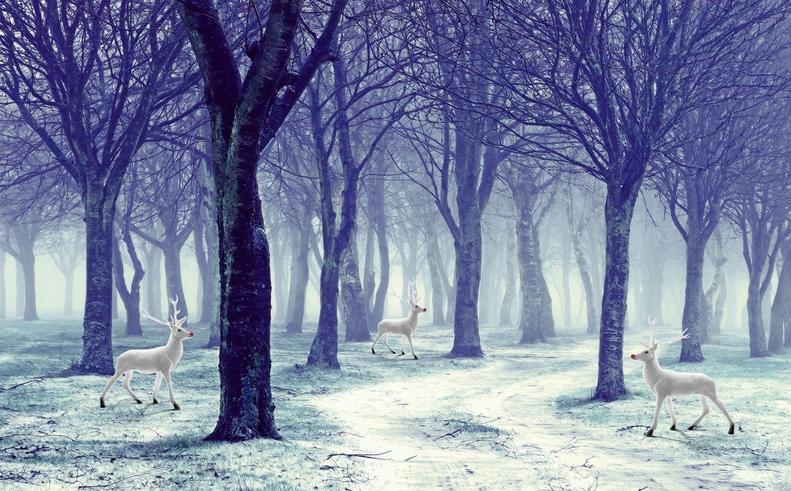 3D Schnee Wald Wald Wald Hirsch 8 Tapete Wandgemälde Tapete Tapeten Bild Familie DE Summer | Sale Deutschland  ec3505
