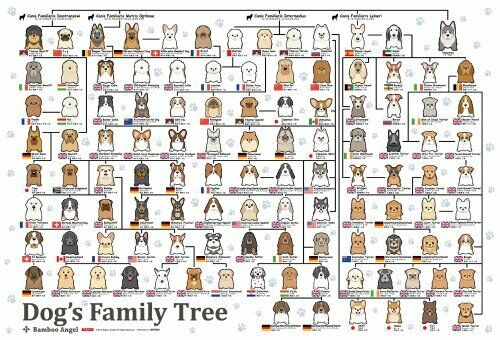 New Beverly Jigsaw Puzzle P61-364 Dogs Family Tree 49 x 72cm 1000 Pieces Japan