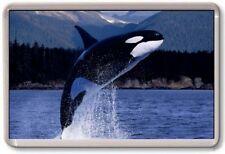 KÜHLSCHRANK-MAGNET - KILLER WHALE - Große - Orca Natur Tierwelt