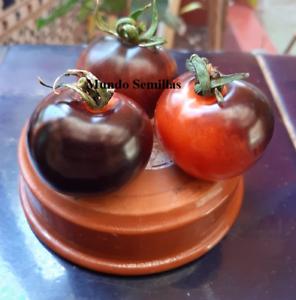 Industrieux Tomate Indigo Rose - 60 Semillas Frescas - Var. Tomate Azul - Seeds Emballage De Marque NomméE