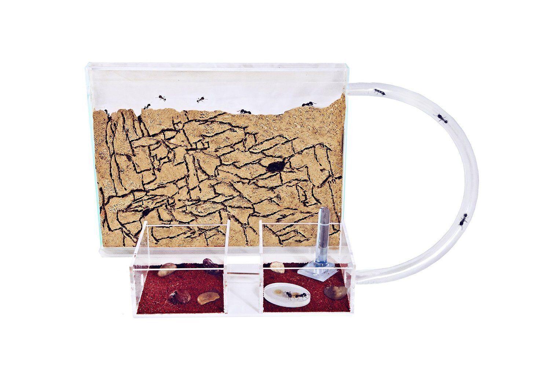 Sand Ant Farm Medium - Educational formicarium for LIVE ants