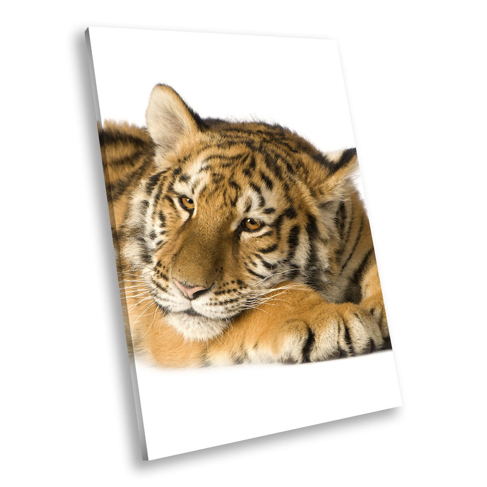 Tiger Cub Orange Weiß Portrait Animal Canvas Framed Art Large Picture