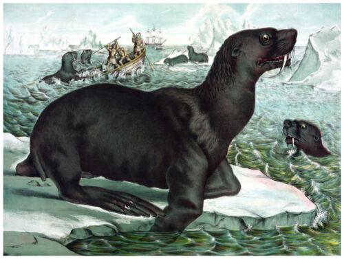 Home Wall Design Decor Wild Life Poster Fine Graphic Art Sea-lions 1201