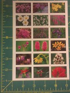 Acid-Free-Alaska-Wildflower-scrap-book-Stickers-beautiful-collectible-sticker