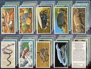 Trade-Card-Set-Brooke-Bond-Tea-INCREDIBLE-CREATURES-Wild-Animal-PO-Box