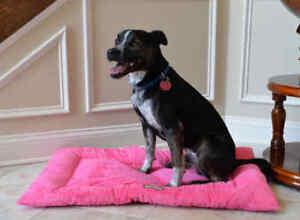 Armarkat-Soft-Pink-Velvet-Dog-Pet-Bed-Mat-Washable-LARGE