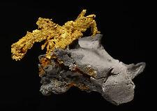 Wire Patch Mine GOLD 0.029 ozt Farncomb Hill, Breckenridge, Colorado 608021