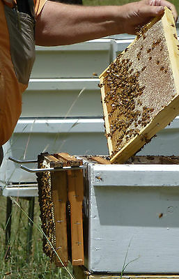 Beekeeping - frame perch to hold frames while inspecting hives - stainless steel