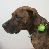 Mini Lime Green Silk Collar Flower With Rhinestone For Dogs -new- Free Shipping