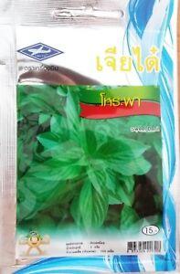 750-seeds-Thai-Sweet-Holy-Basil-Horapha-Ocimum-Sanctum-Tulasi-Herb-Food-Spicy