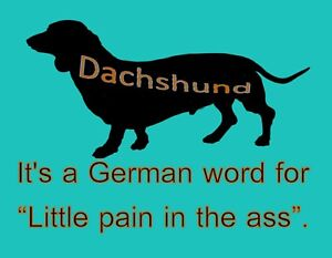 german word for dog
