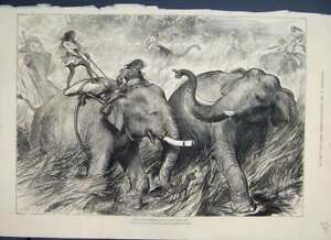 Original-Old-Antique-Print-1876-Tame-Elephants-Hunting-Wild-Ones-19th