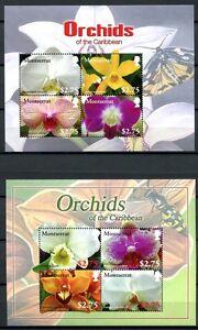 Montserrat-2008-ORCHIDEE-ORCHIDS-FIORI-FLOWERS-FIORI-Blossoms-1436-43-MNH
