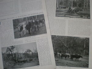 Photo article Timber Felling and Hauling in Queensland Australia 1904 - <span itemprop='availableAtOrFrom'>Ilfracombe, United Kingdom</span> - Happy to reimburse on returns. I try to provide a full description and a good photograph so should you change your mind after purchase I do expect that you will pay return postage. On  - <span itemprop='availableAtOrFrom'>Ilfracombe, United Kingdom</span>