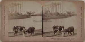 Egitto Il Nile Près Del Cairo Foto Young Stereo Vintage Albumina 1900