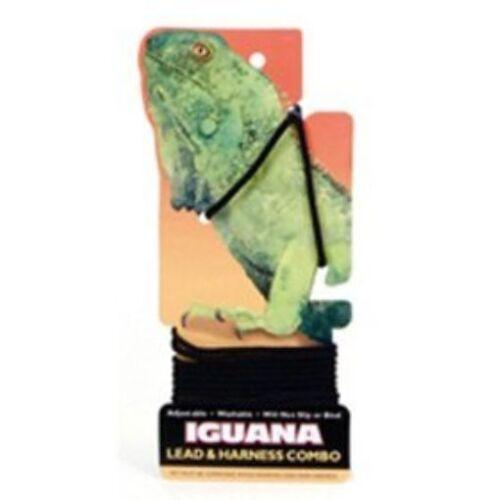 Coastal Iguana Lead and Harness Black Free Shipping