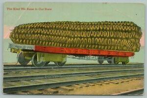 Field-Corn-We-Grow-In-Jackson-Minnesota-Exaggerated-NYC-amp-HR-Railroad-Flat-1912