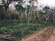Terreno en Venta Berriozabal ( CERCA DE  LLANO SAN JUAN)