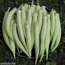 20 Seeds * Rare * Silver Queen Okra Ladies Finger bhindi Organic Heirloom Veg