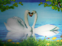 3d Lenticular Poster - Pair Of White Swans Making A Heart Shape - 12x16 Print