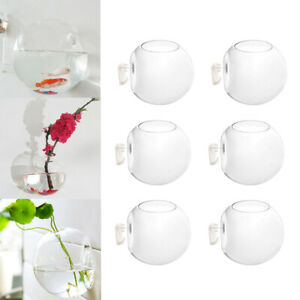 6-x-Wall-Hanging-Glass-Planters-Air-Plant-Pots-Flower-Vase-Indoor-Decor-10cm