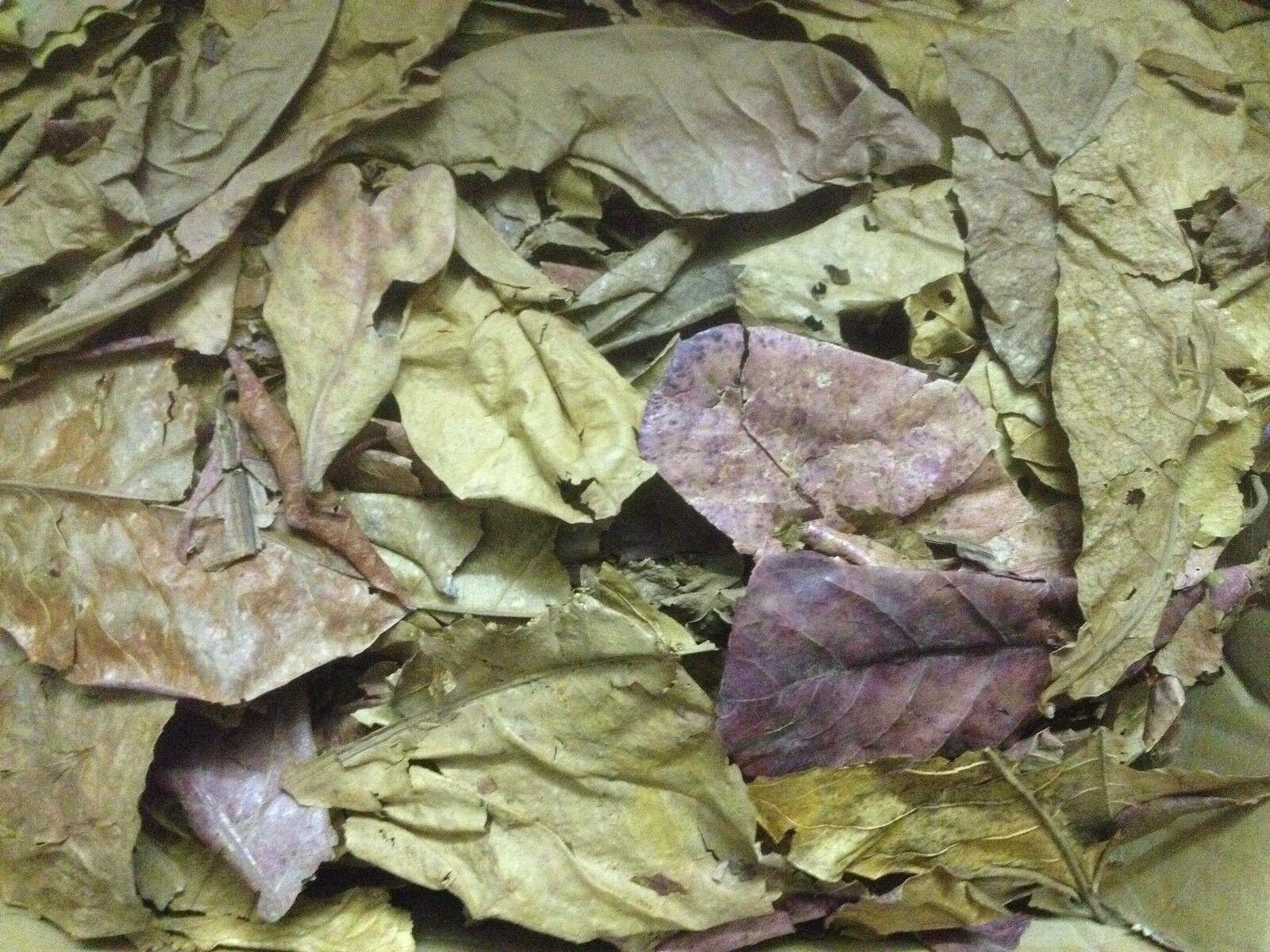 1 kg Feuilles d'amandes de mer, bruchlaub - catappa feuilles Ketapang