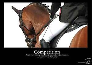 Dressage-Horse-2xPosters-Equestrian-A1-FREE-P-amp-PUK-US-EU