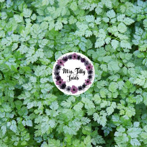 ‼️NEU Kerbel 200 Samen Kräuter Gewürz Garten zweijähriges Würzkraut Kraut