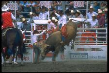 331080 Bull Riding A4 Photo Print