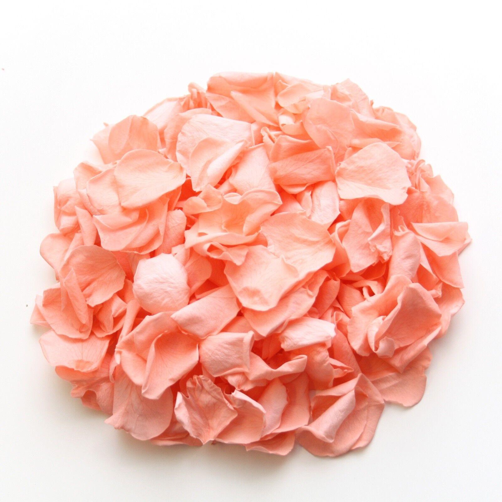 Corail Corail Corail Naturel Biodégradable Pétales de Rose/Mariage Confettis/Décoration | Structurels élégantes  137a55