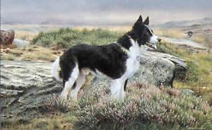 Steven-Townsend-BEN-Border-Collie-Sheep-Dog-Art-English