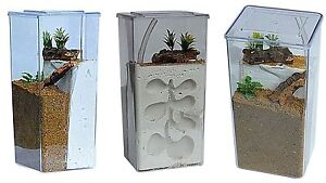 Tall-Clear-Plastic-Ant-Farm-Ant-Formicarium-Display-Case-Various-Options