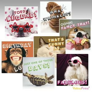 Funny crazy animal antics lol birthday cards greeting cards ebay image is loading funny crazy animal antics lol birthday cards greeting m4hsunfo